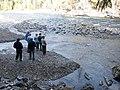 Salmon run at Adams River 2010 (5074661982).jpg