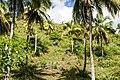 Samaná Province, Dominican Republic - panoramio (72).jpg