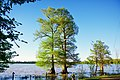 Samburg-Reelfoot-Lake-tn2.jpg
