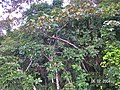 Sandoval , Tambopata - panoramio (25).jpg
