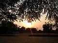 Sandwich sun set between trees.jpg