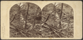 Scene in the Catskill Mountains, after a flood, by London Stereoscopic View Co. 2.png