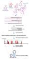 Schematic of RNA chemical probing.png