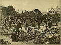 School gardening and nature study in English rural schools and in London (1909) (14780036031).jpg