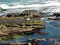 Seals on rocks water.jpg