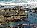 Seals on rocks water.jpg