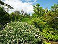 Seattle Garden Club Fragrance Garden.jpg