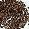 Seeds of Picea abies.jpg