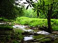 Seneca-Creek-near-camp ForestWander.JPG