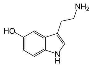 Synoeca surinama - 2-D chemical structure of the neurotransmitter serotonin