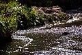 Setun-river 01.jpg