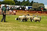 Sheep Dog Display (2621822800).jpg