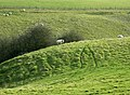 Sheep grazing in a dry valley - geograph.org.uk - 1210699.jpg