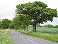 Shefford to Ireland road, Beds - geograph.org.uk - 172152.jpg