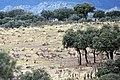 Sierra de Andújar (9).jpg