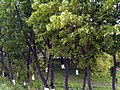 Slope - panoramio.jpg
