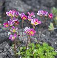 Small flowers (5371688781).jpg