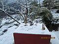 Snow fall at Rasuwa.jpg