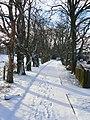 Snowy Path (3263558986).jpg