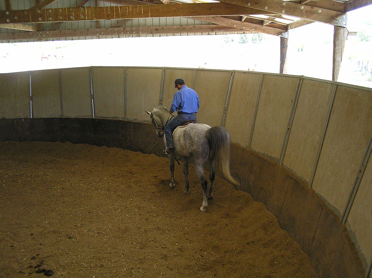 How to Round Pen a Horse How to Round Pen a Horse new picture