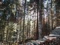 Sommerlicher Herbst Herrenstuhl - panoramio (1).jpg