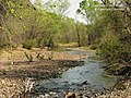 Sonoita Creek Riparian Zone.jpg