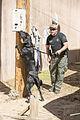 Southern California K9 Teams train at Fort Irwin 150226-M-ZT482-765.jpg