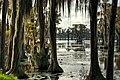 Southern Trees - panoramio.jpg