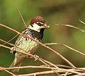 Sparrow 11.jpg
