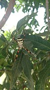 Spider by Rupal.jpg