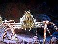 Spider crab, Underwater World, Singapore.jpg