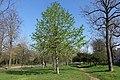 Spring @ Bois de Boulogne @ Paris (33491938652).jpg