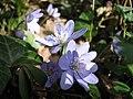 Spring in Botanic Garden Cluj-Napoca (2345969046).jpg