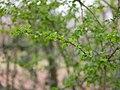Spring leaves (6958334944).jpg