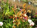 Sri Lanka - Kandy Botanical Garden - Orchids - 01 (1757477862).jpg