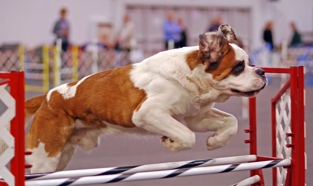 Rose City Akc Dog Show
