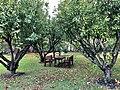 St Edmund's College Orchard.jpg