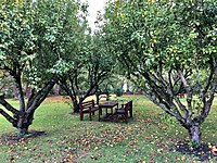 College Orchards