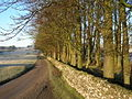 Stand of trees, High Lane, Newbiggin-on-Lune - geograph.org.uk - 102156.jpg
