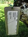 Starr-091104-0792-Delonix elata-plant tag-Kahanu Gardens NTBG Kaeleku Hana-Maui (24360744883).jpg