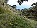 Starr-180305-0028-Pteris cretica-in steep gulch with Kim-Kahikinui-Maui (41191672952).jpg