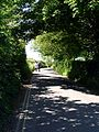 Stone Down Lane - geograph.org.uk - 183599.jpg