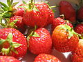 Strawberries 442.jpg