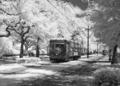 Streetcar, St. Charles Avenue, New Orleans, Louisiana LCCN2010630981.tif