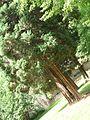 Stromy u branky v parku.jpg