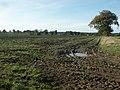 Sugar beet harvest, Wramplingham - geograph.org.uk - 77225.jpg