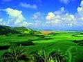 Sugarcane plantation in Mauritius.jpg