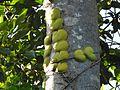 Sulawesi trsr DSCN0830.JPG