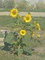 Summer - 99 (2009). (15070192054).jpg