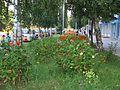 Summer in downtown Dimitrovgrad - panoramio.jpg